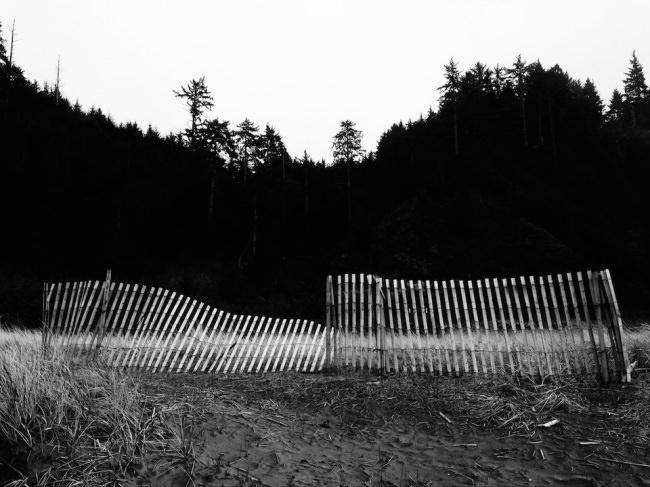 Ein Zaun vor einem dunklen Wald.