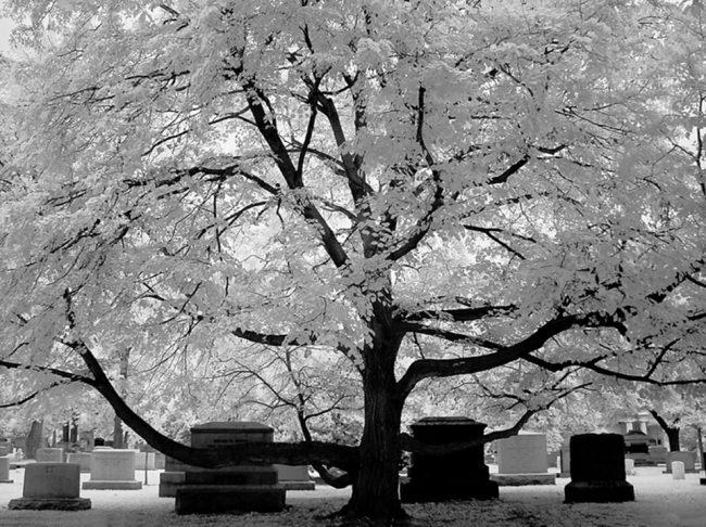 Gräber unter einem großen Baum.