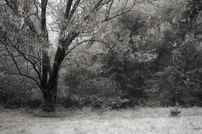 Landschaft mit Wiese, Bäumen und Büschen.