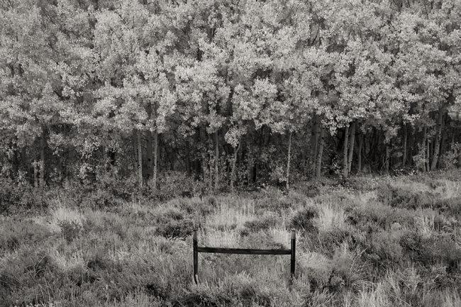 Landschaft mit einer wilden Wiese an einem Wandrand.