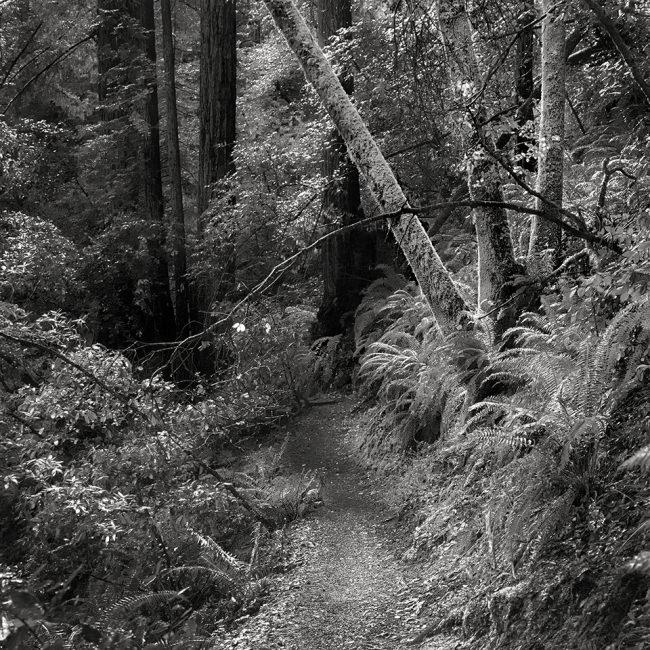 Weg durch einen Wald.