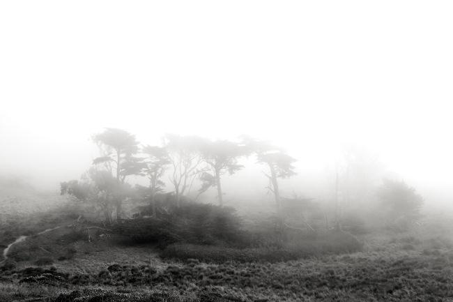 Landschaft im Nebel.