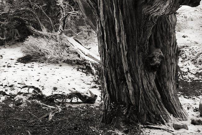 Strukturen an einem Baum und Gebüschen im Schnee.