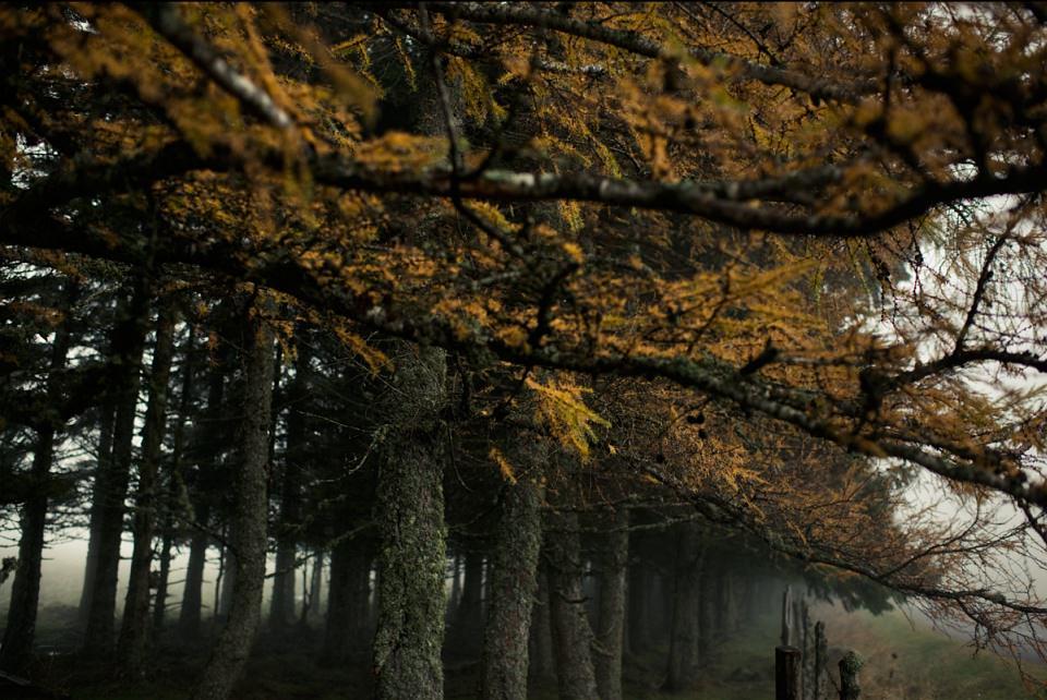 Herbstliche Bäume.