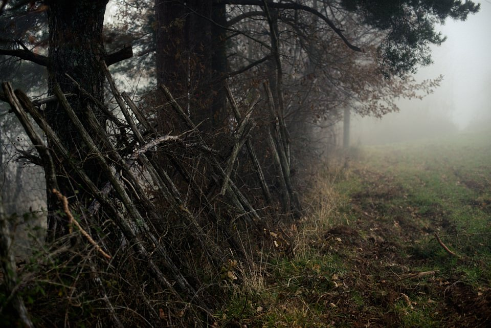 Bäume und ein bemooster Zaun im Nebel.