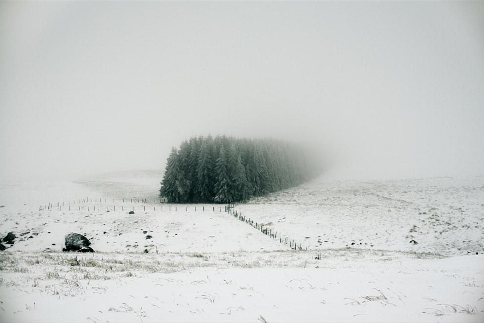 Eine Gruppe Nadelbäume, die auf einem verschneiten Feld im Nebel verschwinden.