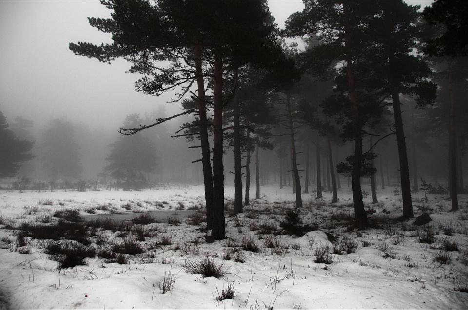 Dunkler Waldrand an einer verschneiten Wiese.