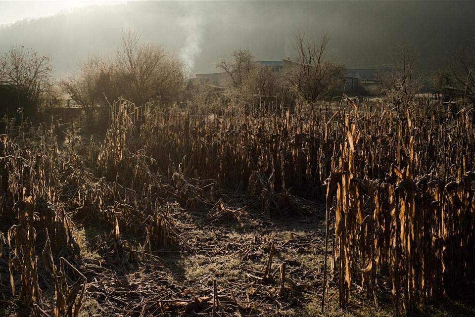 Ein abgeerntetes Maisfeld im Morgenlicht.