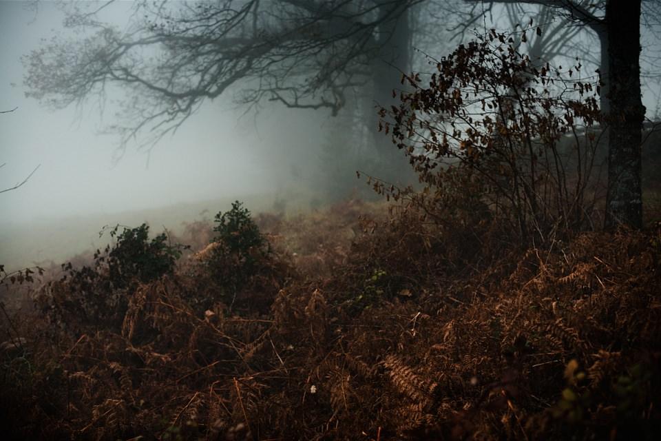 Herbstlandschaft im Nebel.
