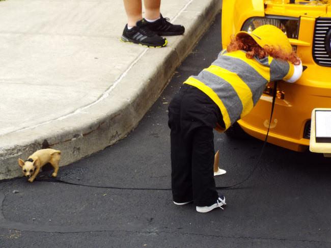 Ein kleiner Hund und ein Mensch, der an einem Bus lehnt.