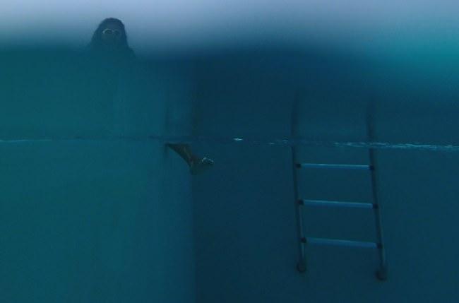 Unterwasseraufnahme mit einer Leiter und Füßen unter Wasser und einem Kopf über Wasser.