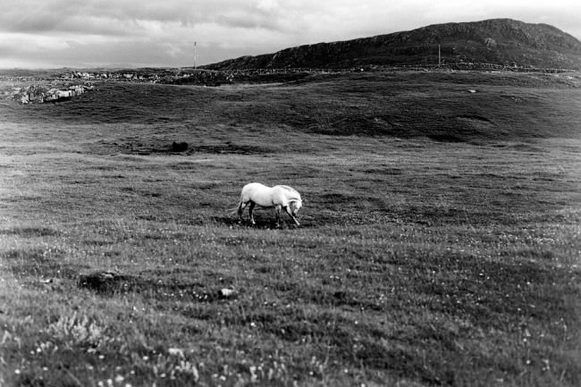 Ein Pferd auf einer Weide.