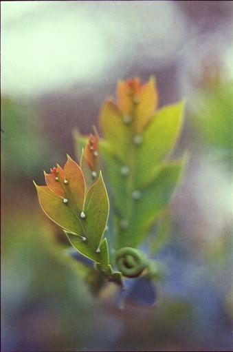 Bunte Blätter.