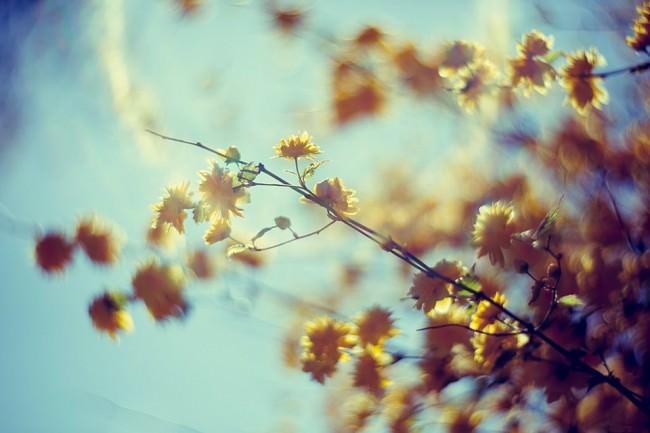 Äste mit Blüten vor blauem Himmel.