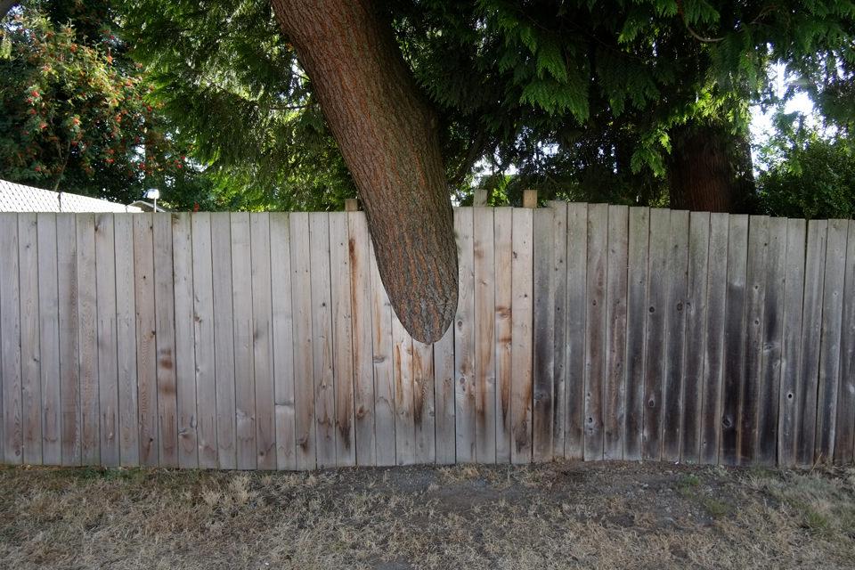 Ein Zaun, der ausgesägt werden musste, weil ein Baum hinübergewachsen ist