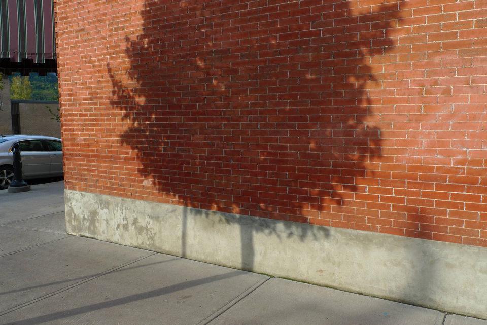 Schatten eines Baumes auf einer Wand.