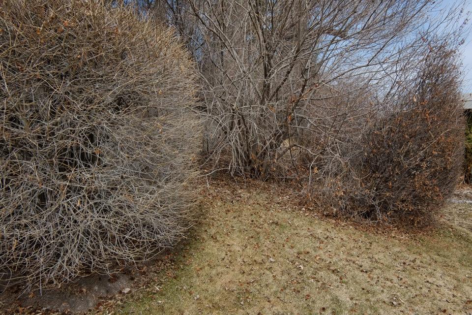 Blick in diverse Formen von trockenen Büschen und Ästen.