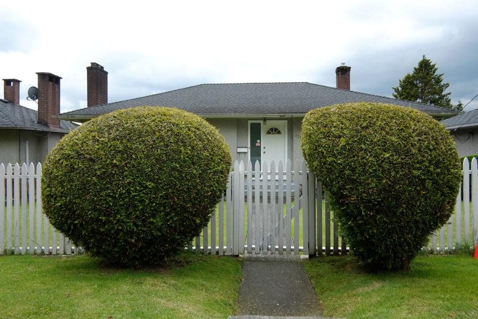 Zwei seltsam anmutende Büsche vor einem Haus.