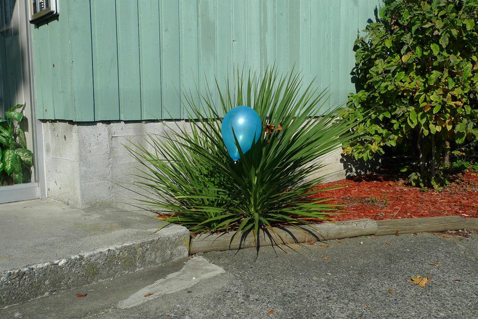 Ein Luftballon sitzt auf einer stacheligen Pflanze