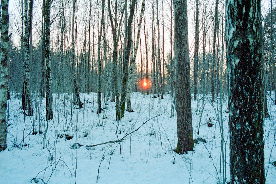 Die Sonne erscheint am Ende des Waldes wie ein roter Punkt.