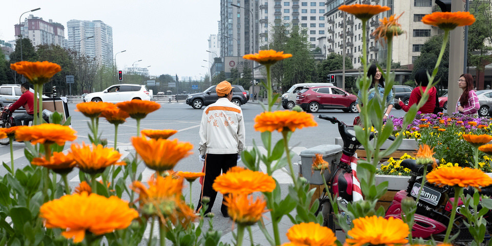 Ein Mann mit oranger Mütze zwischen orangen Blüten.