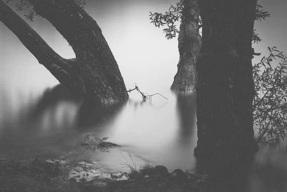 Nebel über Wasser mit Bäumen