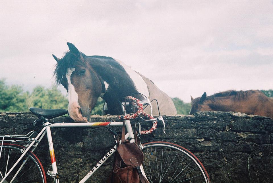 Ein Pferd leckt an einem Rennrad.