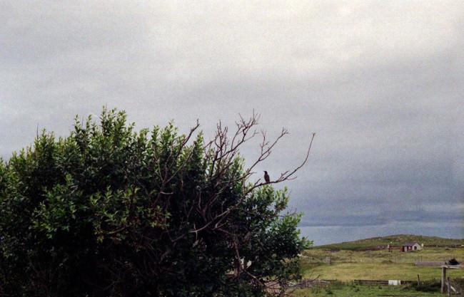Blick aufs Meer und im Vordergrund ein Vogel auf deinem Baum.
