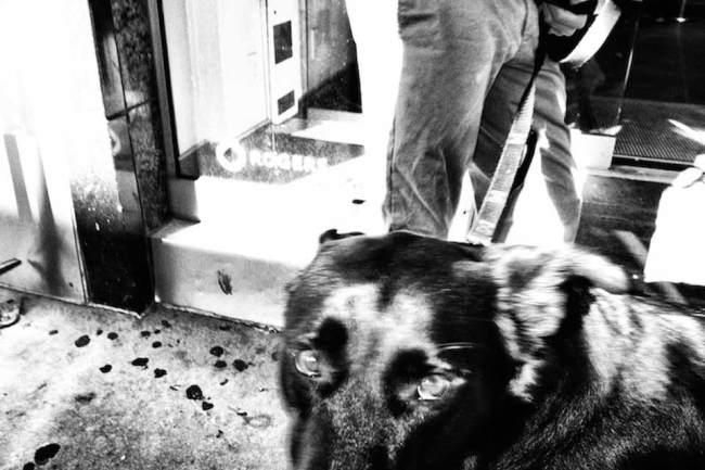 Ein Hund an der Leine