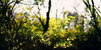 Zweige mit grünen Blättchen im Gegenlicht.
