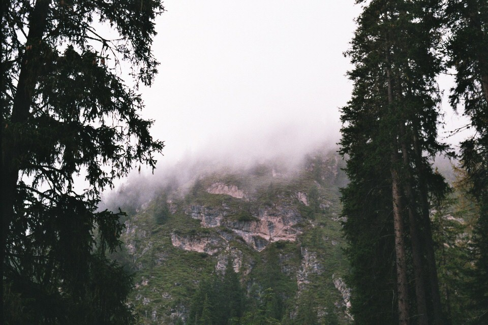 Blick zwischen Bäume hindurch auf eine steile Felswand.