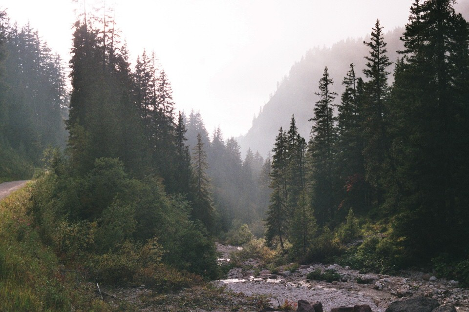Kleiner Flusslauf im Wald.