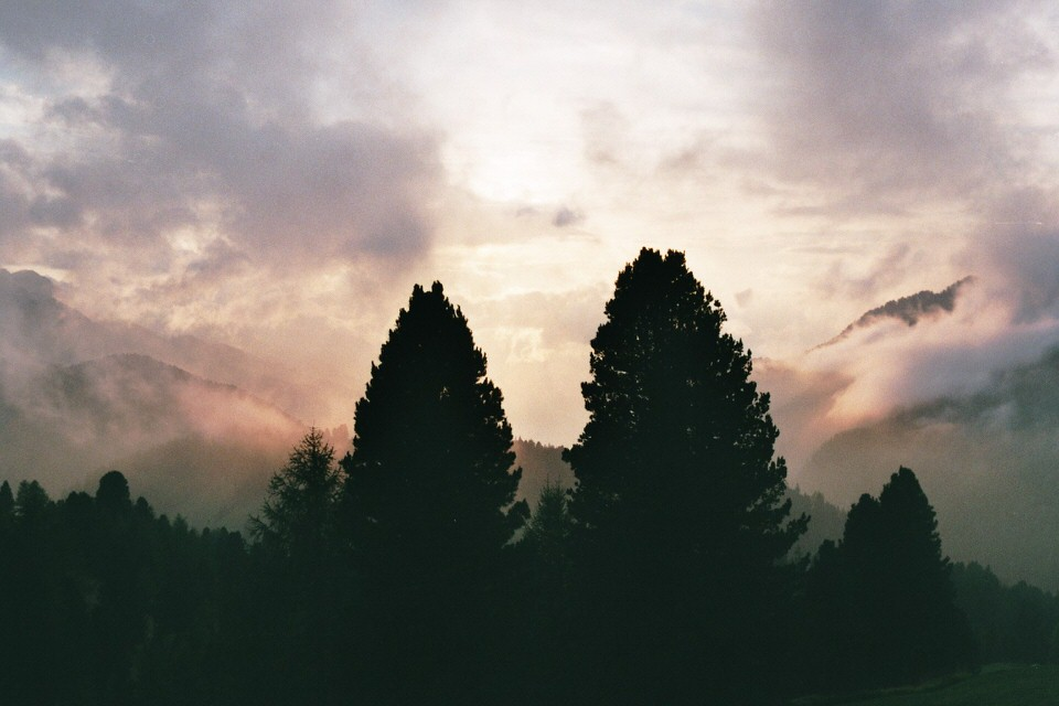 Wald mit zwei herausragenden Baumen im Sonnenuntergang.