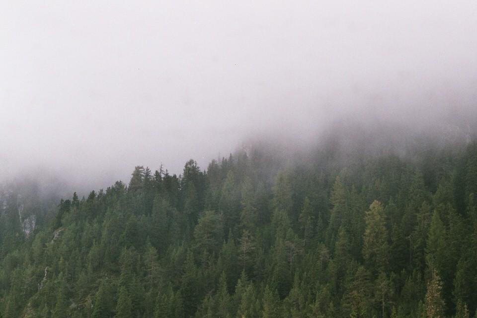 Nebel über dem Wald.