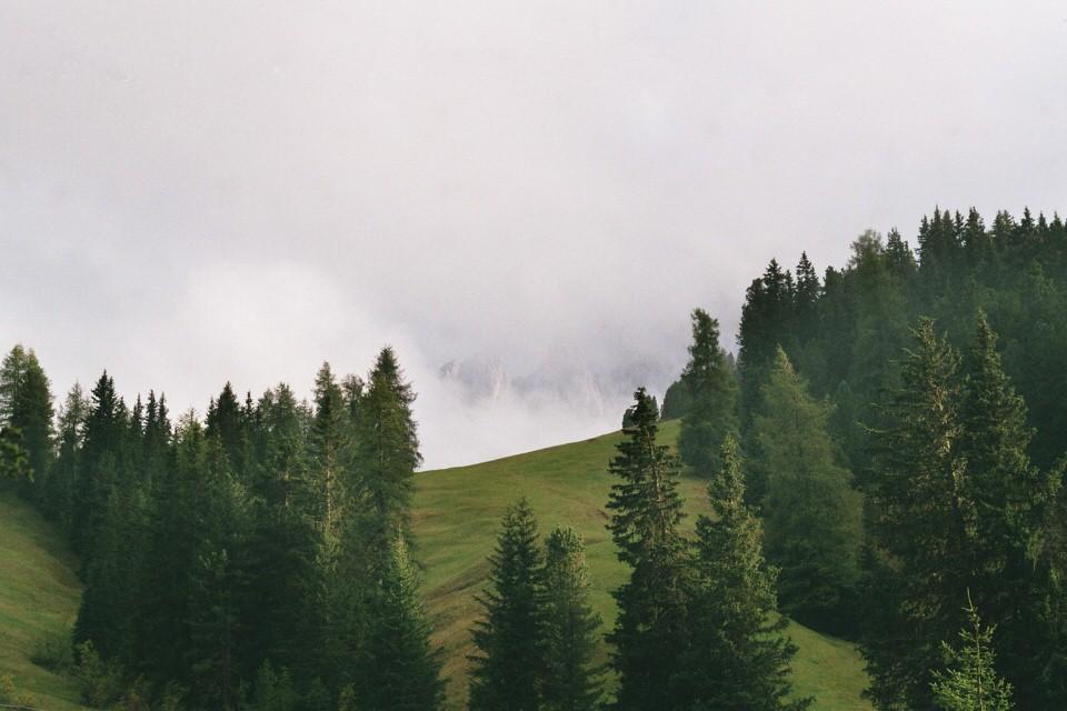 Grüne Wiese mit Tannen. In der Ferne erkennt man vage Felsen zwischen den Wolken.