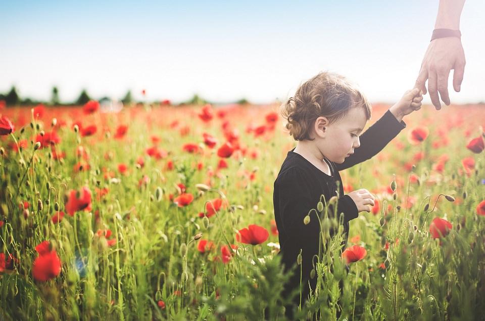 Ein kleines Kind steht im Mohnfeld und hält die Hand eines Erwachsenen.