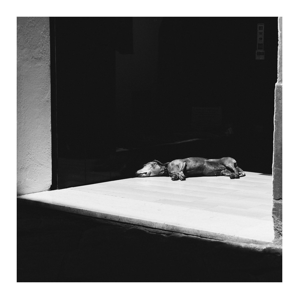 Ein Hund döst im Schatten.