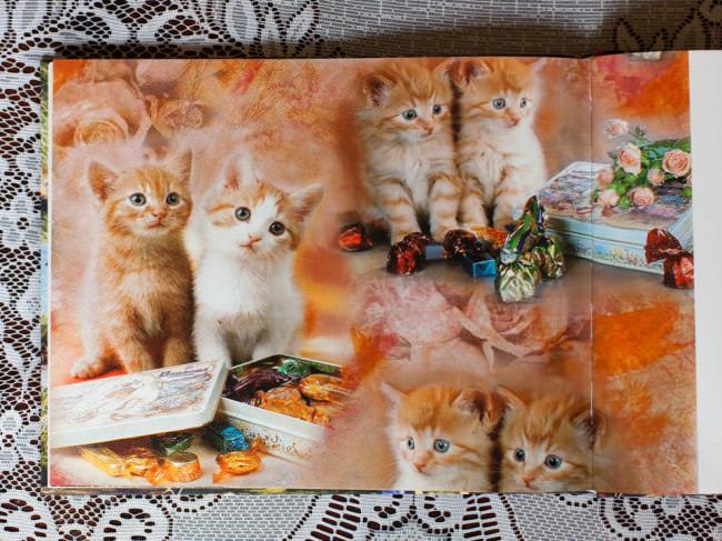 Eine Buchseite mit Katzenbabys