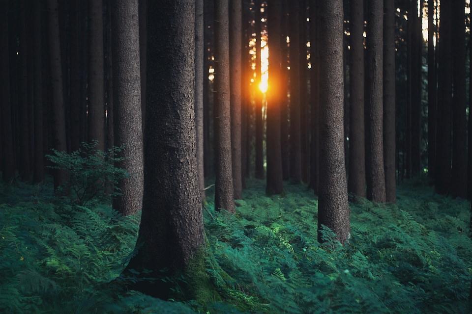 Sonne scheint zwischen Bäumen eines Waldes hindurch.