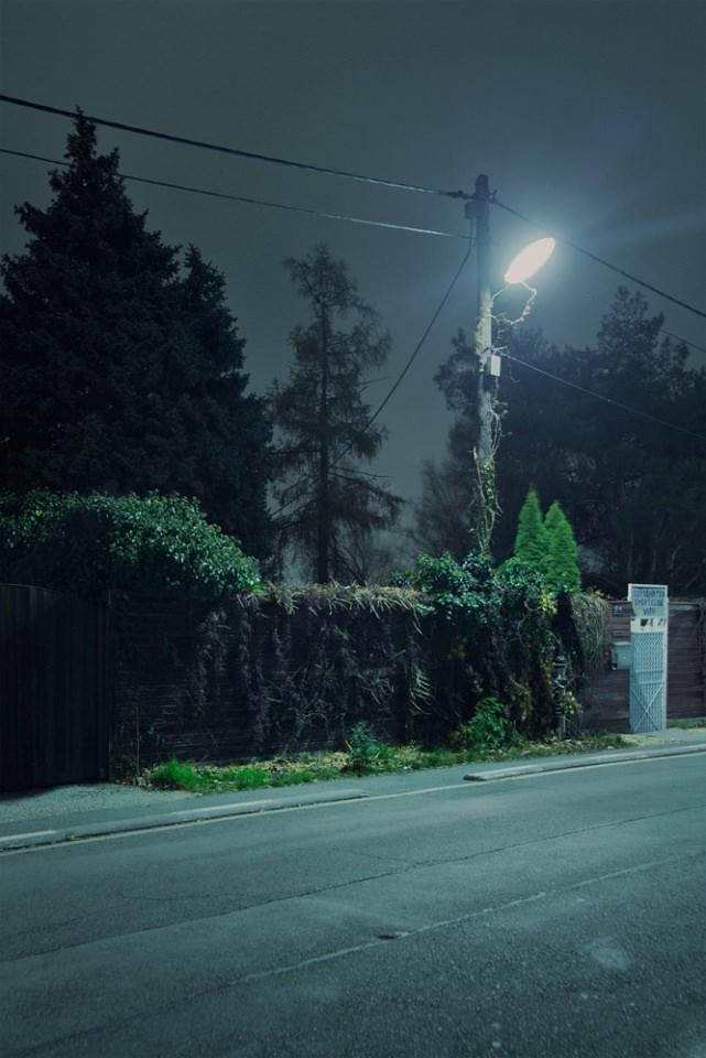 In der Nacht leuchtende, von Pflanzen überwucherte Straßenlaterne.