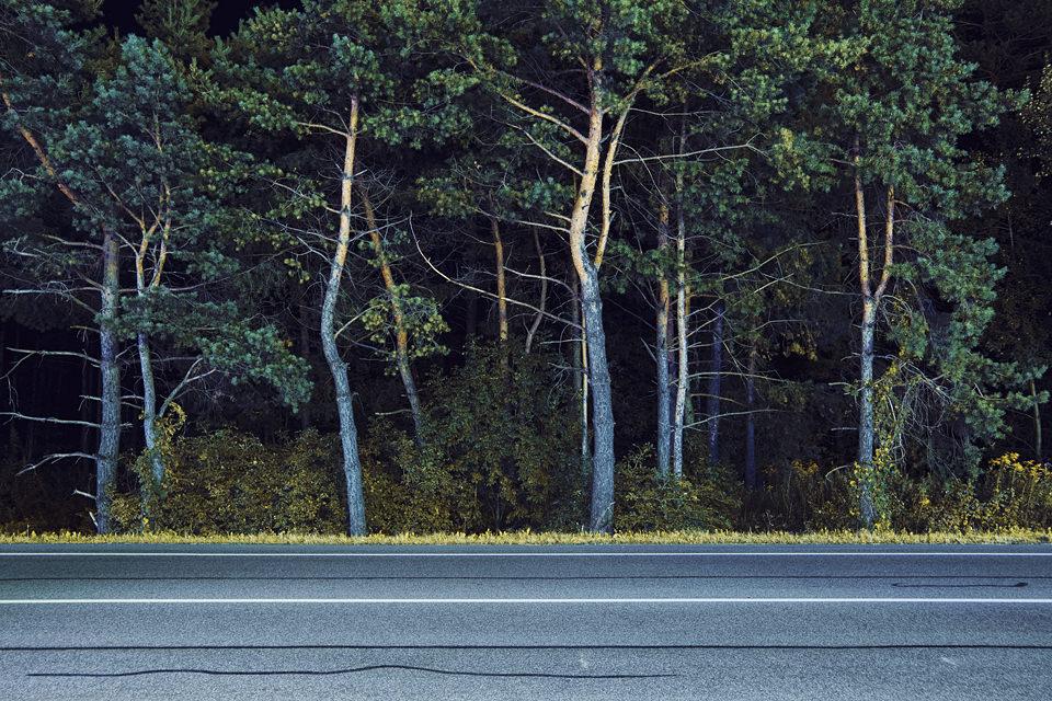 Bäume am Straßenrand.