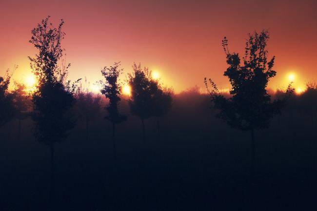 Silhouetten von Büschen vor rot beleuchtetem Nebel.