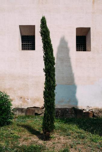 Baum zwischen zwei Fenstern.