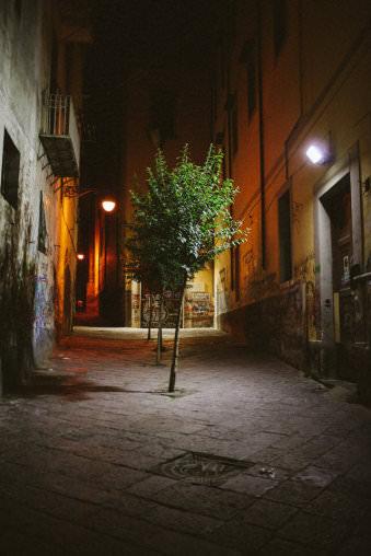 Nächtliche Straße mit kleinem Bäumchen.