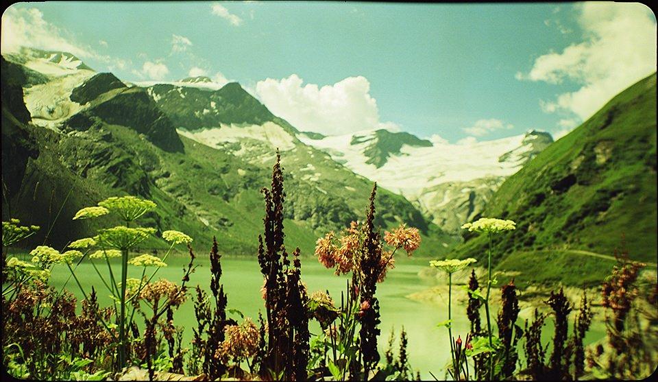 Wilde Blumen vor einer Bergkulisse.