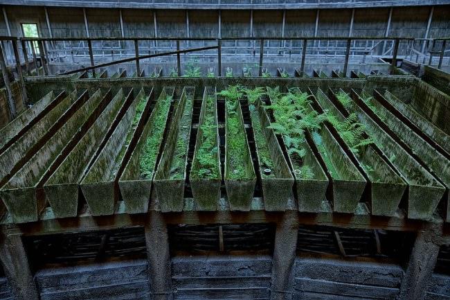 In Betonrillen wachsen Moos und kleine Pflanzen.
