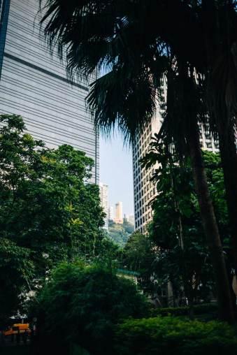 Grünansichten mit Hochhäusern