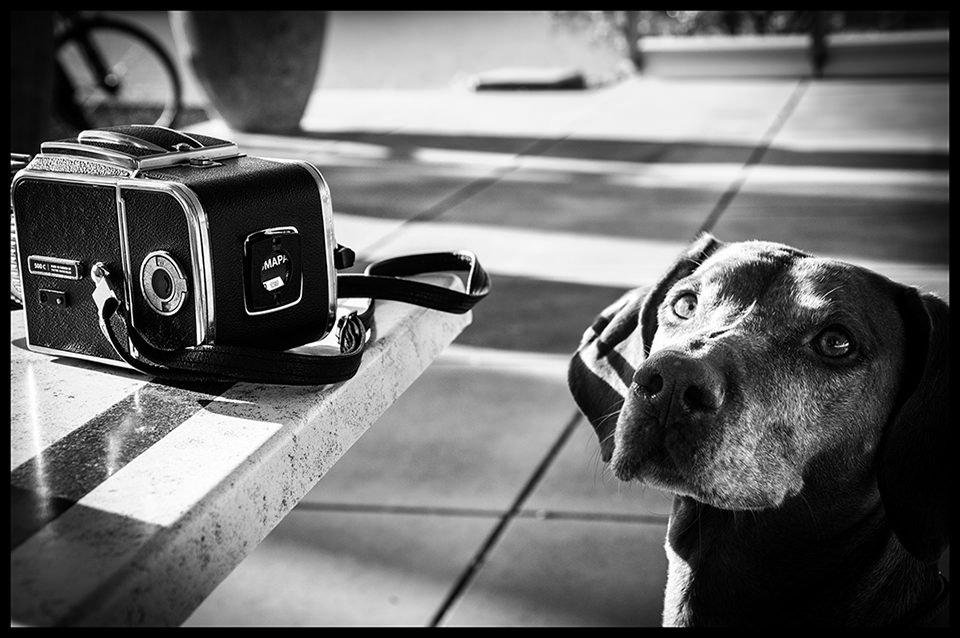 Hassi Hund © Jürgen Modis