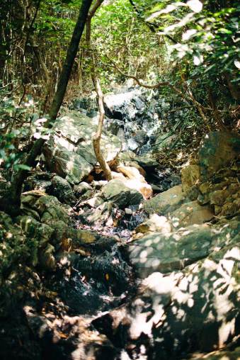 Steine und Bäume in der Natur