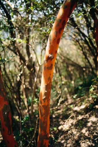 Natur und ein Baum